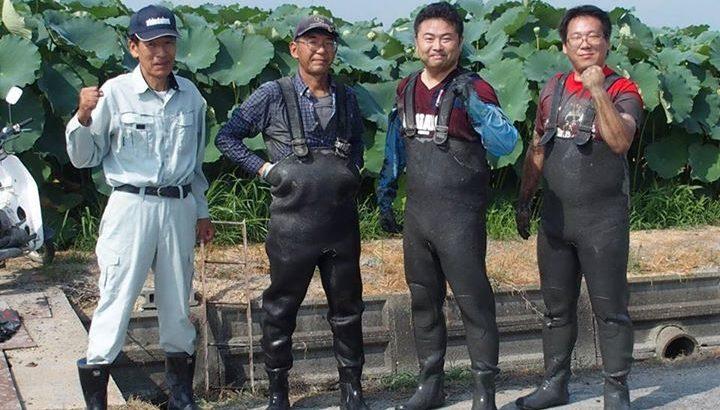 藤田でレンコン農家の仕事を体験させてもらいました